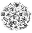 round floral design with black and white laelia vector image