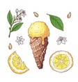 set of citrus ice cream vector image vector image