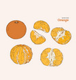 set of orange hand draw sketch vector image vector image
