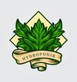 hydroponik leaf logo with ribbon vector image vector image