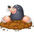 Cartoon funny mole vector image