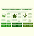 different strains cannabis horizontal info vector image