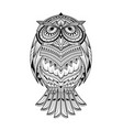 owl animal coloring page vector image