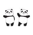 panda bear isolated vector image vector image