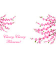 sakura cherry blossoms is located on both sides vector image vector image