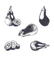 vintage ink hand drawn eggplants isolated on vector image
