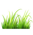 frash spring green grass background vector image