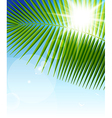 palm leaf1 vector image vector image