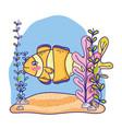 tropical crownfish animal with seaweed plants vector image vector image