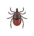 deer tick isolated on white vector image