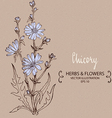 Blue Chicory plant vector image vector image