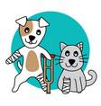 character dog and cat hurt leg broken on w vector image vector image