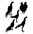 roosters gesture silhouette 06 vector image vector image