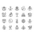 garden charcoal draw line icons set vector image