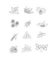 set of black and white berries vector image vector image