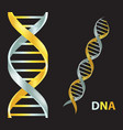 gold and silver dna icon gene icon vector image