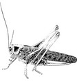 insect pest locust vector image vector image
