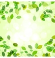 Summer branches with fresh green leaves vector image vector image