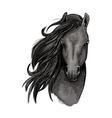 Black mare horse head sketch vector image vector image