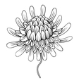 Coloring page with Etlingera flowers Torch Ginger vector image