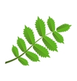 Green branch with leaves vector image vector image