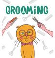 grooming pets cat haircut vector image vector image