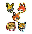 wild dogs and wild cats mascot collection vector image