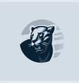 black panther turns and grimaces vector image vector image