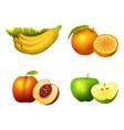 fresh fruits slice realistic juicy healthy vector image vector image
