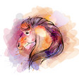 watercolor horse head vector image