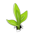 Young sprout vector image vector image
