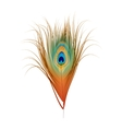 peacock feather isolated on white vector image vector image
