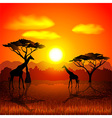 Sunset in african savannah background vector image vector image