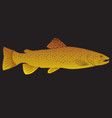 brown trout river fly fishing fly tying vector image vector image