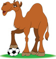 Camel with soccer ball vector image