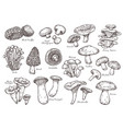 forest mushrooms sketch vintage plants engraving vector image vector image