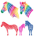Colorful zebras set vector image