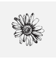 Set with drawing flowers vector image vector image