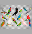 tropical parrot set on transparent background vector image