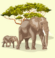 cartoon family of african elephants walking vector image