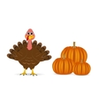 Cartoon turkey with pumpkins on the feast day vector image