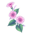 hand drawn pink bindweed flower with leaves vector image vector image