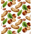 hazelnuts pattern watercolor painted style vector image vector image