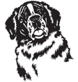 head of saint bernard black white vector image vector image