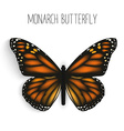 Monarch butterfly isolated realistic vector image