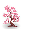 cherry tree with pink flowers sakura isolated on vector image vector image