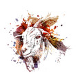 color head of goat vector image vector image