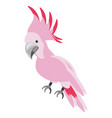 isolated cute pink bird vector image vector image