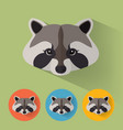 raccoon portrait with flat design vector image