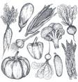 set hand drawn farm vegetables in sketch vector image